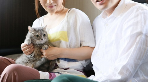 カップルの女性に抱かれている猫