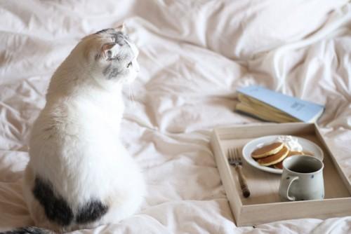 パンケーキに興味を示す猫