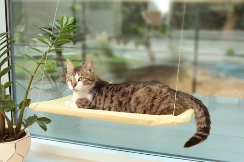 窓辺のベッドでひなたぼっこをする猫