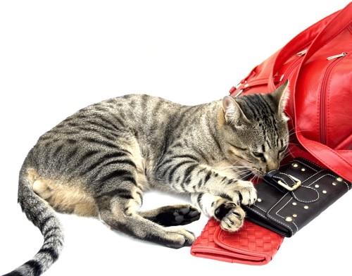 赤いバッグとパスケースと寝転ぶ猫