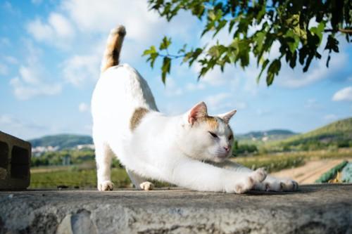 青空の下で体を伸ばしている猫