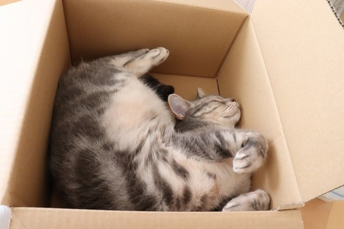 箱の中で爆睡する猫