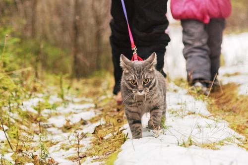 飼い主と雪道を散歩する猫