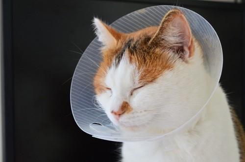 エリザベスカラーをつけて眠る猫