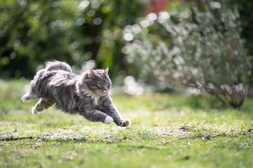 屋外で走り回る猫