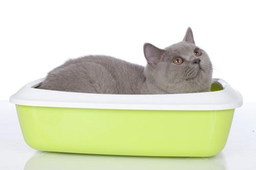 トイレの中でくつろぐ猫