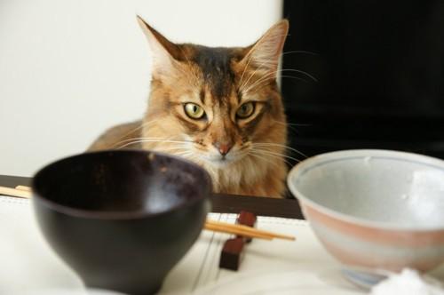 食卓の食器を見る猫