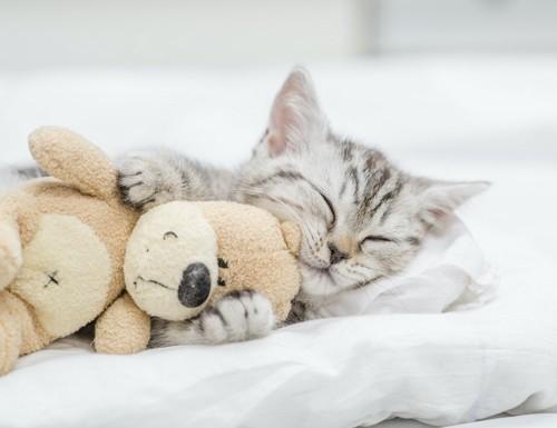 ぬいぐるみを抱いて寝る子猫