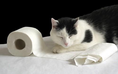 猫とトイレ紙