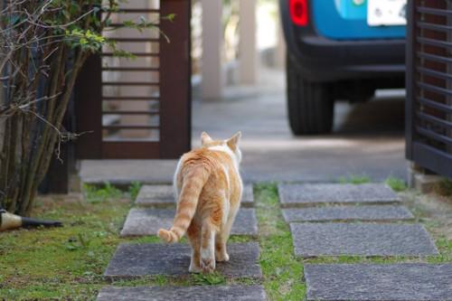 去っていく猫