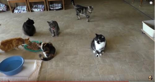 部屋の中に複数の猫