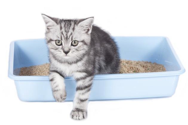 猫用トイレから出ようとする猫