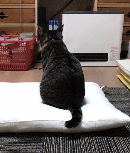 ストーブの前を陣取る猫