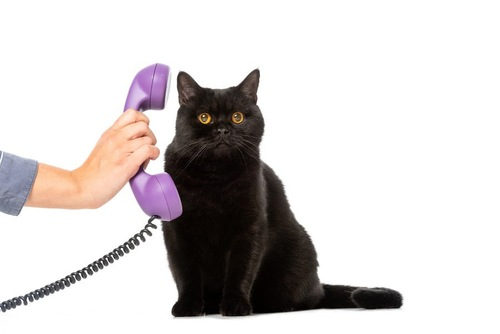 電話する猫