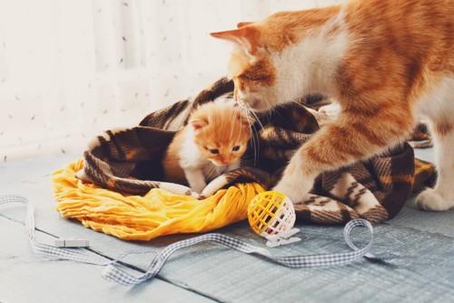 毛布と子猫