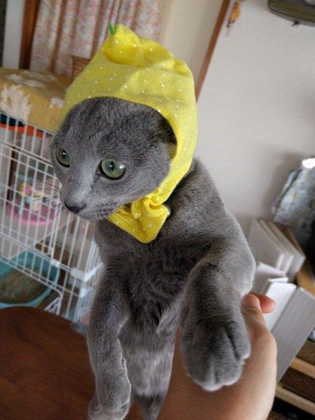 レモンにへんしんしたロシアンブルーのグレーテル