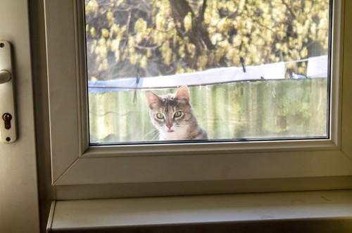 窓の外から中を見る猫