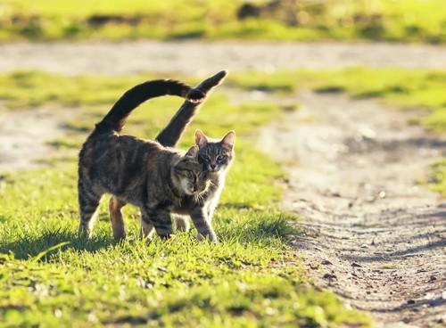 寄り添って外を歩く2匹の猫