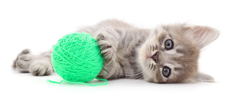 紐で遊ぶ猫