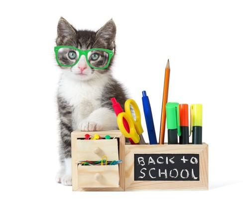 文房具と猫
