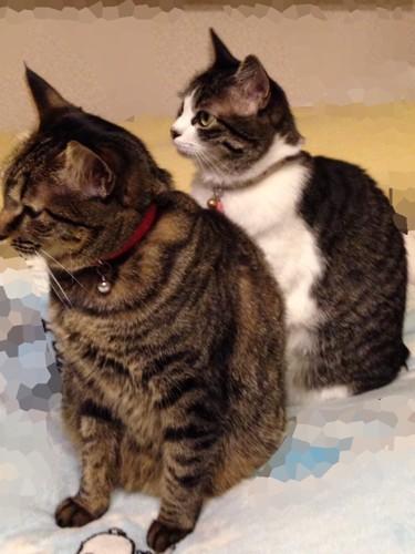 猫の首輪シスターズ