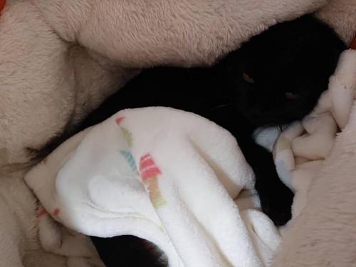 ベッドとお布団