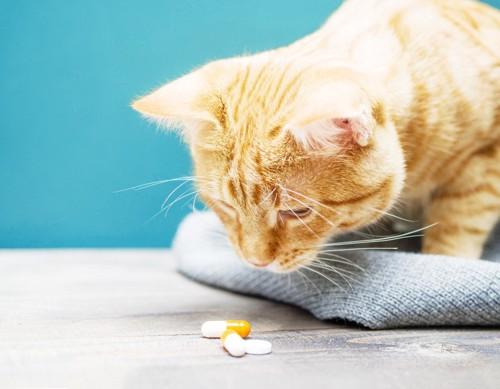 薬を見る猫