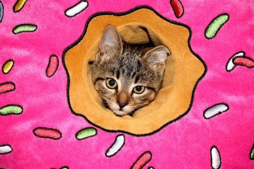 ドーナツの穴から顔を出す猫
