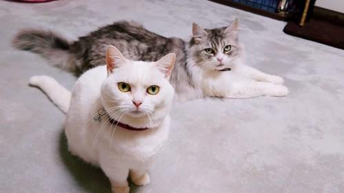 伏せている猫と座る猫