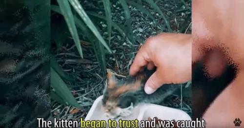 子猫にさわる手