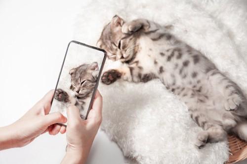 子猫の撮影