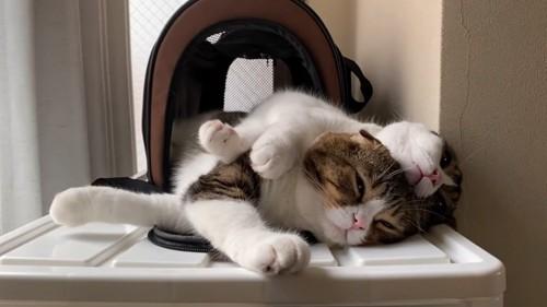 重なって寝る2匹の猫