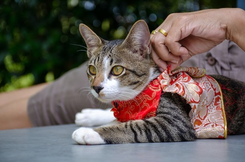 猫に洋服を着せている飼い主の手