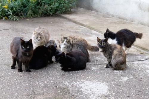 集まって寄り添う野良猫たち