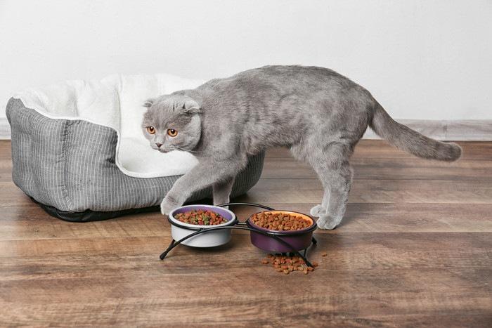 えさ皿をよける猫