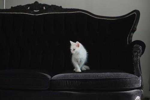 黒いソファの上の猫