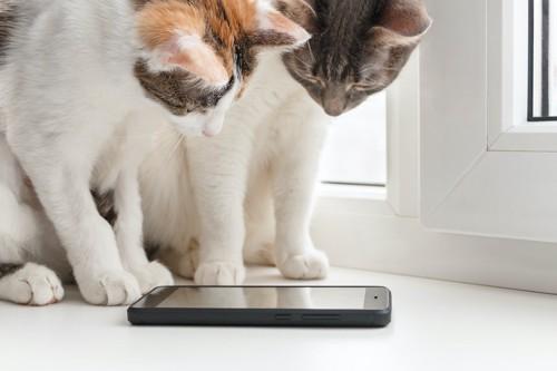 スマートフォンを見る2匹の猫