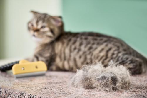 ブラッシング後の毛とくつろぐ猫
