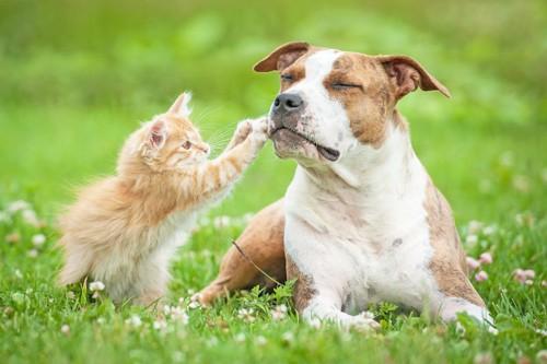 自分より大きな犬に近づく子猫