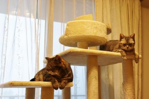 タワーでくつろぐ猫達