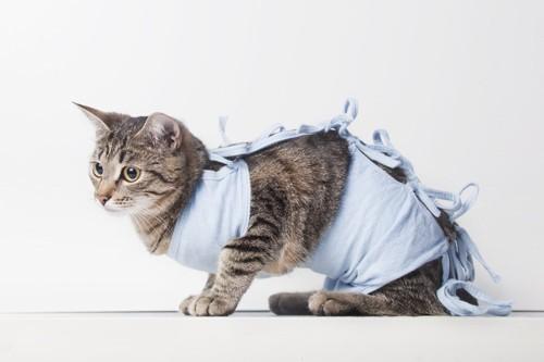 手術着を着ている猫