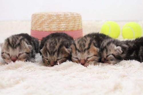 生まれたばかりの子猫たち