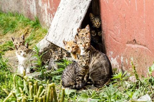たくさんの野良猫