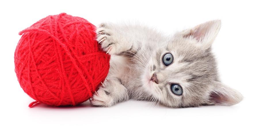 丸い毛糸で遊ぶ子猫
