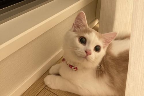 窓辺で振り返る猫