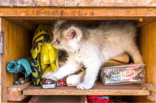 探索する猫