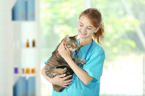 女性獣医師と猫