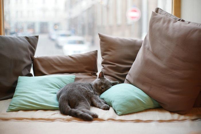 部屋の中で寝る猫