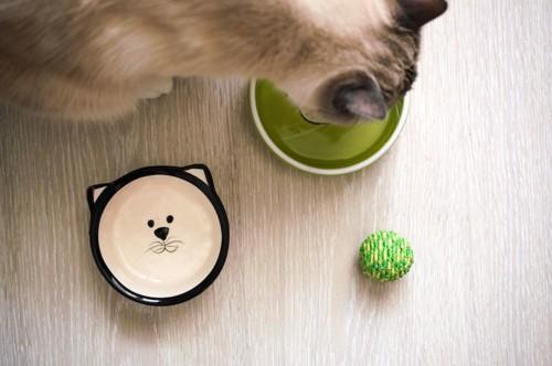 餌を食べる猫の上からの写真