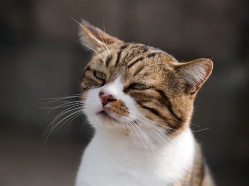 片耳を傾ける猫